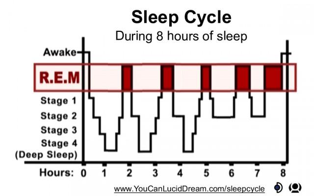 slaploosheid: slaapfases
